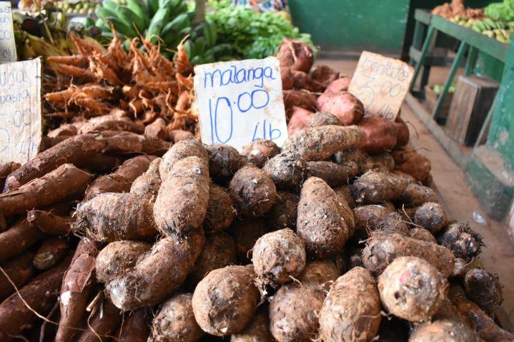 Malanga for sale